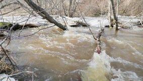 Dooi en rivierbeweging door gevallen takken van bomen langzame geanimeerde video stock video