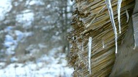 dooi Water die van houten met stro bedekt loodsdak druipen stock video