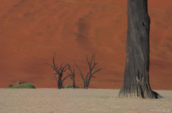 Dooie vlei, Namibia #2. Red dunes and dead trees in Dooie vlei, Namibia Stock Images