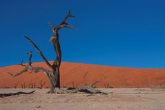 Dooie vlei, Namibia #3. Red dunes and dead trees in Dooie vlei, Namibia Stock Photography