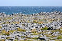 Rocks and vegetation on Doolin beach, county Clare, Ireland. Doolin`s Bay, The Burren, County Clare, Ireland Royalty Free Stock Photo