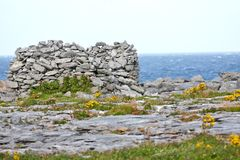Rocks and vegetation on Doolin beach, county Clare, Ireland. Doolin`s Bay, The Burren, County Clare, Ireland Stock Photos