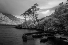 Doolough Trees In Infrared Royalty Free Stock Images