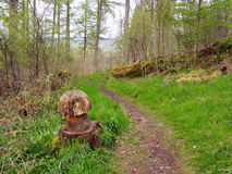 Doon Hill and Fairy Knowe, Aberfoyle. An easy circular walk from Aberfoyle, climbing mystical Doon Hill, home of the fairies, and passing through woodland Royalty Free Stock Photo