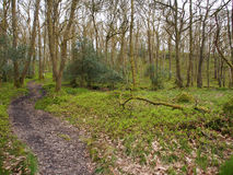 Doon Hill and Fairy Knowe, Aberfoyle. An easy circular walk from Aberfoyle, climbing mystical Doon Hill, home of the fairies, and passing through woodland Stock Image