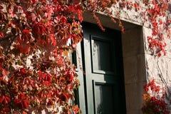 Door. Green door in Split Croatia showing the fall colorful leaves Royalty Free Stock Images