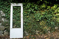 Door against an overgrown wall. The white door leaned on a wall overgrown by ivyn Royalty Free Stock Photos