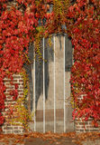 Door with autumn leaves. The door of an old barn framed with autumn maple leaves Royalty Free Stock Images
