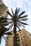 Door bladeren van een palm Stock Afbeelding
