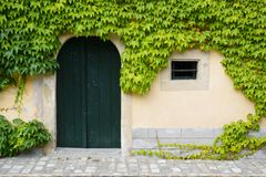Door almost covered with ivy Royalty Free Stock Photo