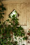 Door covered in ivy in an abandoned house royalty free stock photo
