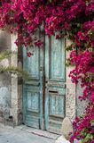 Door in Cyprus. Old wooden door with bougainvillea in Cyprus Royalty Free Stock Photography