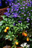 Door de bloemist Royalty-vrije Stock Foto