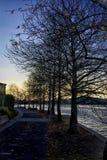 Door de Bomen Stock Foto