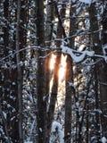 Door de Bomen Stock Fotografie