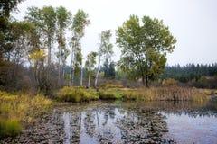 Door de kust van Rose Lake. Stock Foto's