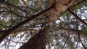 Door de takken van bomen stock video