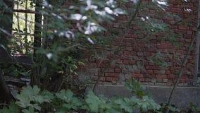 Door de takken van bomen en een gebroken venster is zichtbaar cijfer van een geheimzinnige mens die door het venster van weggegaa stock videobeelden
