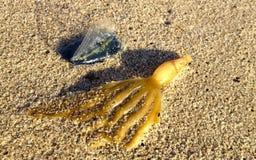 Door-de-windzeeman en overzees onkruid op zand Stock Foto