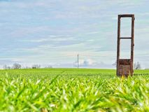 The door on the field. Minimal compo with door on the field grass Royalty Free Stock Images