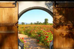 Door and flower field outside