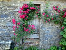 Door with flowers in the Route of Santiago de Compostela Royalty Free Stock Photography