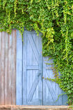 Door in garden and plant. A wooden blue color door closed in garden with green liane plant, shown as quiet and leisure style Stock Image