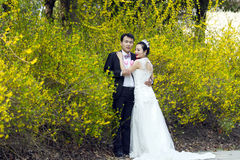 Door gouden jasmijnbloemen, een paar geschotene huwelijksfoto Royalty-vrije Stock Foto