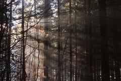 Door het bos Stock Foto
