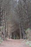 Door het bos royalty-vrije stock foto's