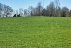 Door het gras Stock Foto