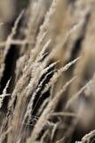 Door het lange gras stock afbeeldingen