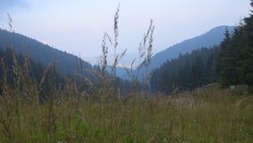 Door hoog gras stock footage