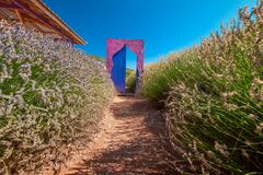 Free Door In A Lavender Field As A Backdrop For Photo Shoots. Popular Attractions For Travel Bloggers Royalty Free Stock Images - 199059399
