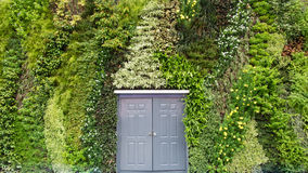 Door on ivy background. Royalty Free Stock Photos