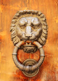 Door knocker in shape of lion's head. Florence. Royalty Free Stock Photos