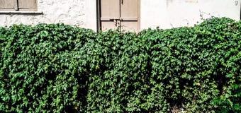 The door Royalty Free Stock Image