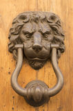 Door lion knocker Stock Image