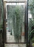 A door with many tillandsia or epifyten hanging down royalty free stock image