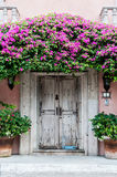 Door in Mexico. An Old Door in Mexico, covered with Bouganvillia Royalty Free Stock Photography