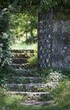 Door in nature. A beautifull door and stairs Stock Images