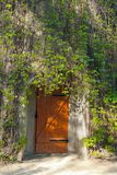 Door in an old brick building, covered with ivy. Shot made in re. Servation national park Askania Nova, Ukraine Royalty Free Stock Images