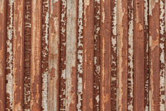 Door. old wood texture. background panels Royalty Free Stock Photography
