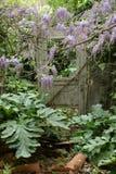 Door in overgrown garden. Old broken door in overgrown garden of abandoned house Stock Images