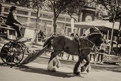 Door paarden getrokken vervoer stock afbeelding