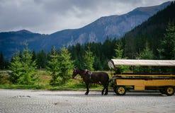 Door paarden getrokken vervoer op bergweg Royalty-vrije Stock Foto's