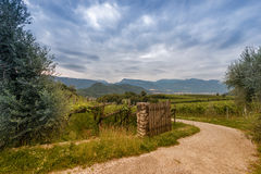 Door on stone column at grape vine agriculture Royalty Free Stock Photo