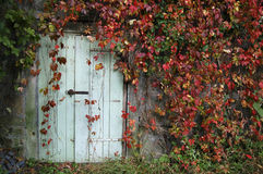 Door surounded by Red Leaves. Light-blue Door with a rusty lock, surrounded by autumn Red wild wine leaves. Photo taken in Park Lesna, Czech republic Royalty Free Stock Photography