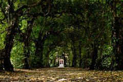 Door in a tunnel of trees. Enchanted door in a tunnel of trees, magical ambient and scene royalty free stock images