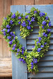 Door wreath in heart shape with boxwood and grape hyacinth flowers Royalty Free Stock Images